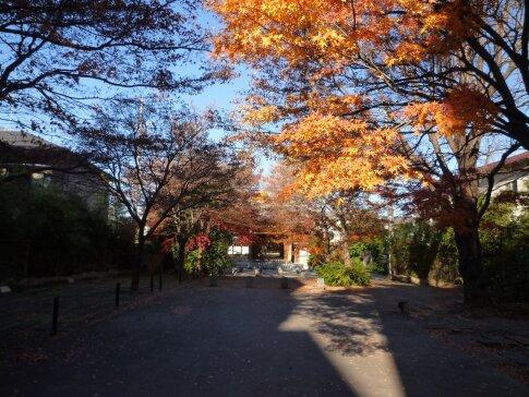 高円寺の紅葉.jpg