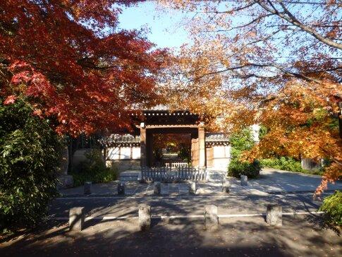 高円寺の紅葉2.jpg
