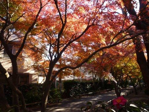 高円寺の紅葉4.jpg