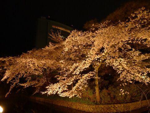 高崎城址公園の夜桜5.jpg