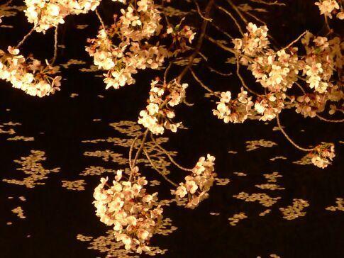 高崎城址公園の夜桜6.jpg