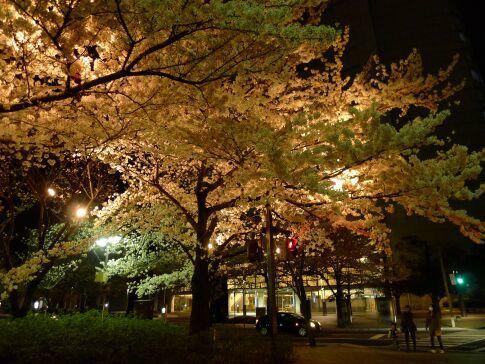 高崎城址公園の夜桜7.jpg