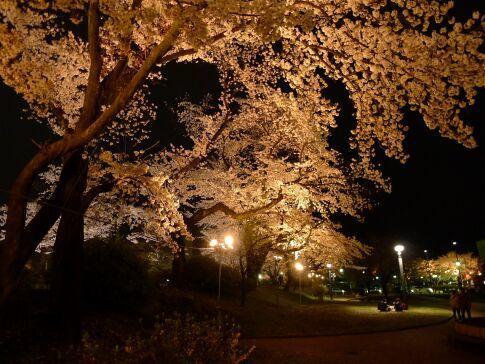 高崎城址公園の夜桜9.jpg