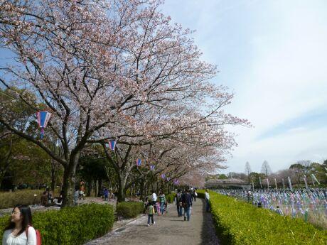 鶴生田川桜並木4.jpg