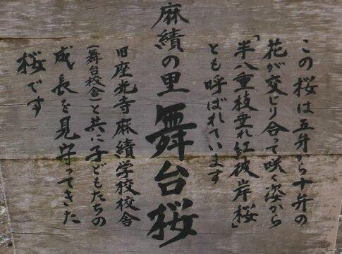麻績の舞台桜5.jpg