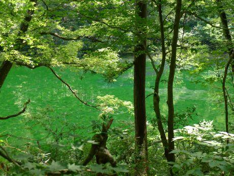 龍ヶ窪の水201204.jpg