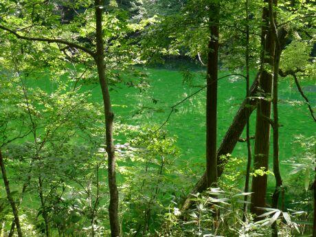 龍ヶ窪の水201201.jpg