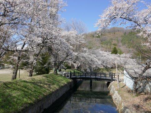 龍岡城 桜4.jpg