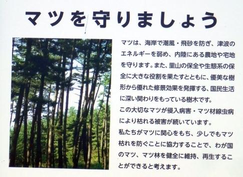 龍舞崎7.jpg